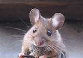 Blog - Mouse