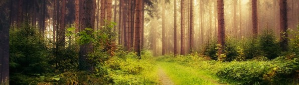 cropped-peaceful-forest-photography-cover