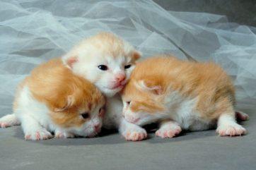 Newborn-Kittens-1