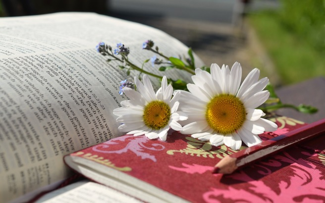 daisies-676368_1920